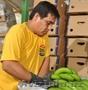 Бананы зелёные оптом - Изображение #4, Объявление #332951