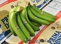 Бананы зелёные оптом - Изображение #2, Объявление #332951