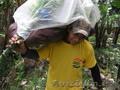 Бананы зелёные оптом - Изображение #5, Объявление #332951